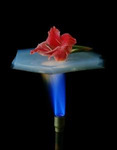 aerogel-flower